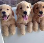 puppies 123