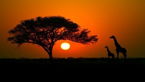 saharan desert - by CW THE HARRY POTTER FAN