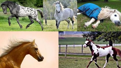 My favorite horses - by Horses are my thang
