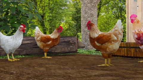 Chicken yard - Modern - by matildabeast