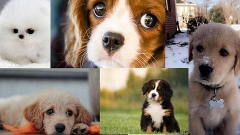 super cute puppies - by luna selvaggia