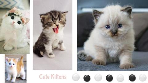 Cute Kittens - by Itzy