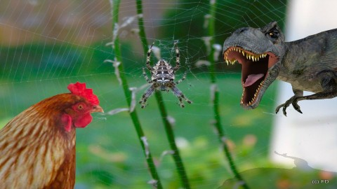 Chicken or spider - Eclectic - Garden  - by Orionaute