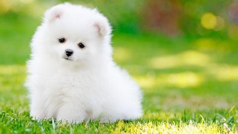 Puppy_ - by Jahsoftball_