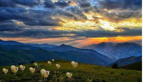 sheep on a hill - by GarrettDaniel