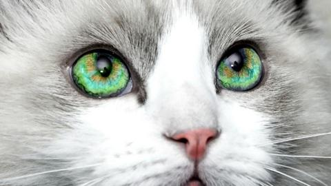Cat with AMAZING eyes - by KittyT6