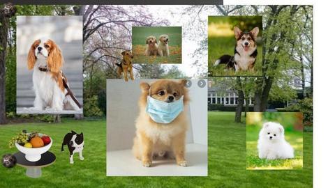 Dogs - by malithu damsath