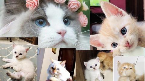 CATS - by Mainastar