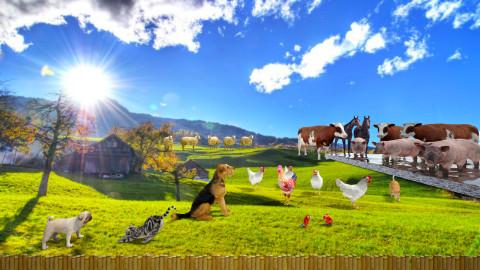 Comfortable farm - Eclectic - Garden  - by Orionaute
