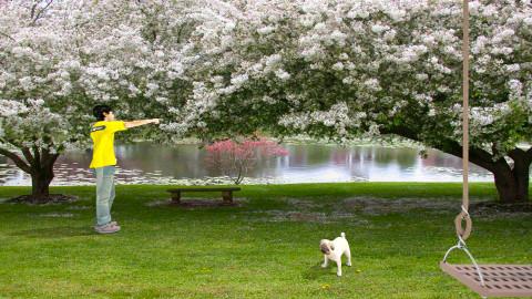 Fetch - Eclectic - Garden  - by Theadora