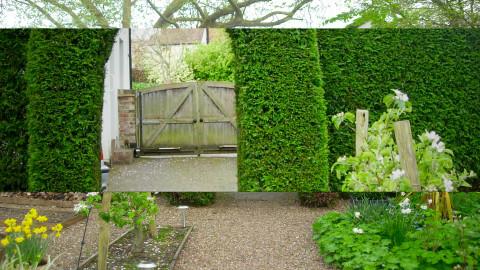 Front Garden - Classic - Garden  - by stalhaz