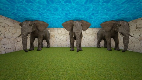 zoologico - Classic - Garden  - by Claudia Velez