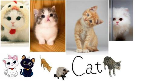 Cats - by MB2006