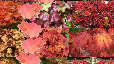 autumn.. - Global - Wallpaper - by 5ruzk