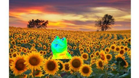 RAINBOW FROG - by waffledoghaha