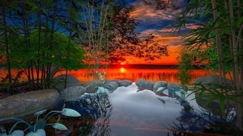 Pond - Garden  - by MiDesign